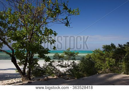 View Through Shrubbery Towards The Sea And A White Sand Beach