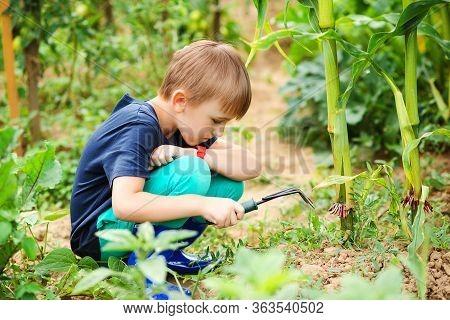 Little Helper Planting Plants In The Garden. Garden And People Concept. Childhood.