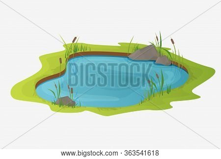 Picturesque Water Pond With Reeds. The Concept