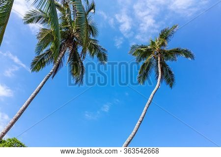 Palm. Caribbean Beach With Tropical Forest. Tayrona National Park. Colombia. Tayrona National Park I