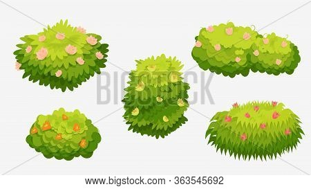 Green Bushes With Various Flowers. Green Bushes