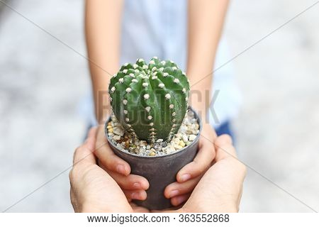 Save The Earth  - Two Hands Hold Pot Of Cactus Plant Together