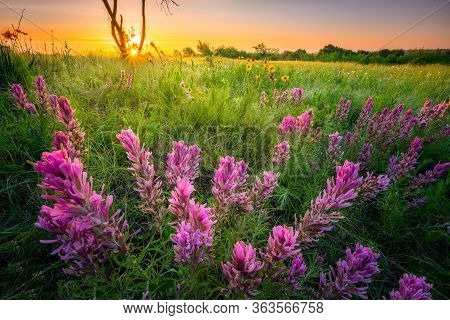 Rural Texas Lupine Field And Grasses At Sunrise