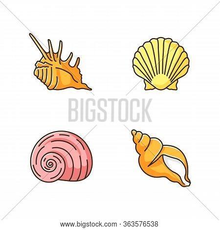 Exotic Sea Shells Rgb Color Icons Set. Molluscan Cockshells, Conchology Sea Scallop, Moonshell, Trit