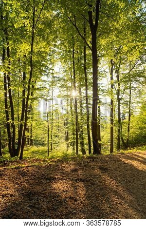 Springtime Forest With Setting Sun Shining Through. Nature, Forestry, Habitat, Environment And Susta