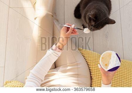Woman Feeds A Cat With Yogurt From A Spoon, Top View. Black Cat Begs For Food From Her Owner Eating