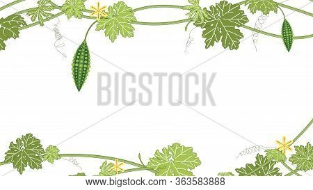 Bitter Melon With Green Leaf And Flower On White Backgrpond. Bitter Gourd Fruits Vector Illustration