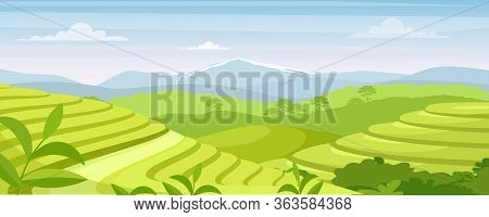Green Tea Plantation Landscape Vector Illustration. Cartoon Flat Rural Farmland Fields, Terraced Far