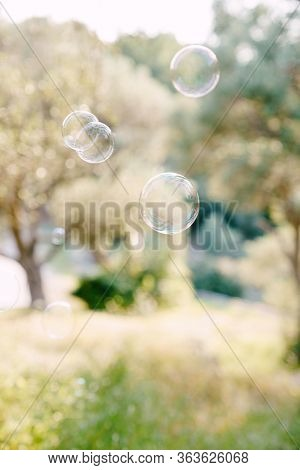 Balls Of Soap Bubbles Fly Against The Olive Grove At Sunset. Blurred Background Of Olive Grove.