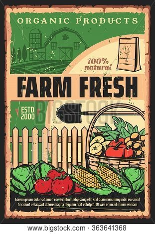 Farming And Agriculture, Farmer Harvest Organic Vegetables And Fruits, Vector Vintage Poster. Farmla