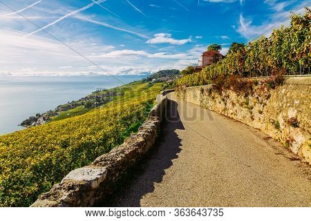 Lavaux Vineyard Terraces Hiking Trail With Lake And Mountain Landscape, Canton Vaud, Switzerland