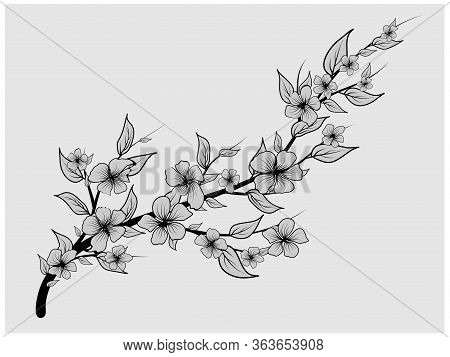 Cherry Background. Cherry Blossom. Japanese Black For Decoration Design. Spring Fashion. Gray Backgr