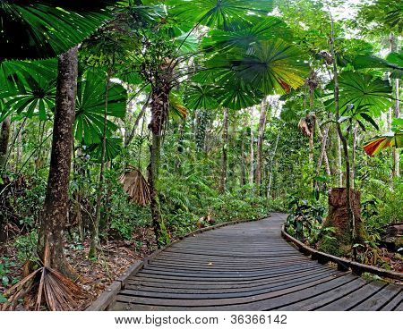poster of trail in fan palm tropical rain forest Cape Tribulation Australia, Daintree rainforest, ancient jungle tourism and travel explore the wilderness