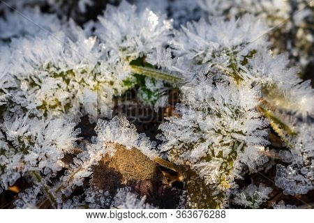 Beautiful Crystalline Hoarfrost On Grass In Nature