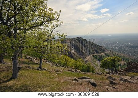 Spring Trees On The Top Of The Roumanian Mountain