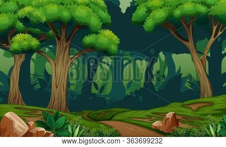 Deep Forest Scene With Trail In The Woods Illustration