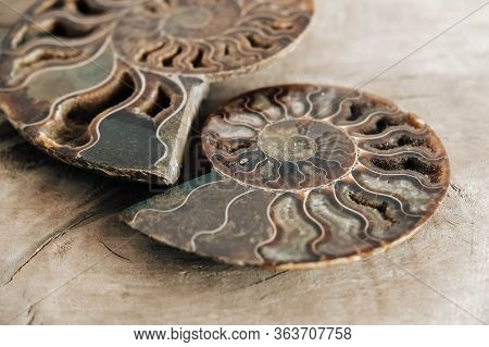 Ammonites Fossil Shell On Wooden Background. Copy, Empty Space For Text. Polished Half Of Petrified