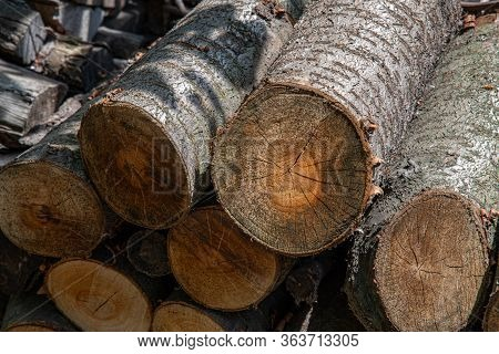 Woodpile Of Cut Logs With Tree Ring Pattern. Traditional Rural Fuel Concept. Tree Trunk Cross Sectio