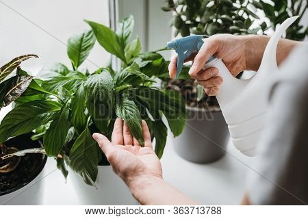 Man Spraying Water On A House Plant And Flower With A Spray Bottle At Home. Housework And Household