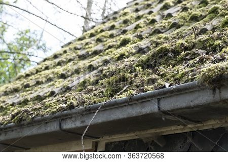 Dirty Roof With Dense Moss And Gutter With Leaves And Moss, Requiring Cleaning.