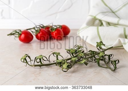 Empty Cherry Tomato Twigs, Stem With Red Tomato And Towel On On A Kitchen Table. Stems Left After Ri