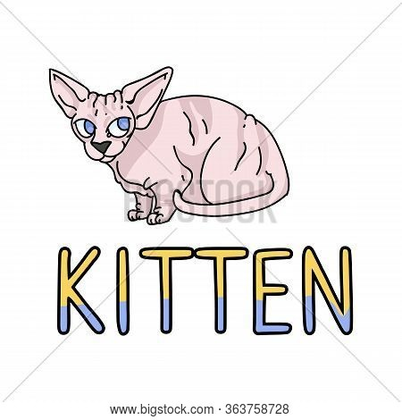 Cute Cartoon Sphynx Kitten With Text Vector Clipart. Pedigree Exotic Kitty Breed For Cat Lovers. Pur