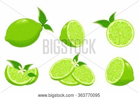 Fresh Lime And Lime Juice. Limes Slices, Green Citrus Fruit With Leaves And Lime Blossom Isolated Ve