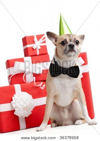 Pale yellow doggy in green fool's cap is near the presents, isolated on white poster