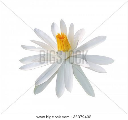 White waterlily isolated on white (clipping path included)