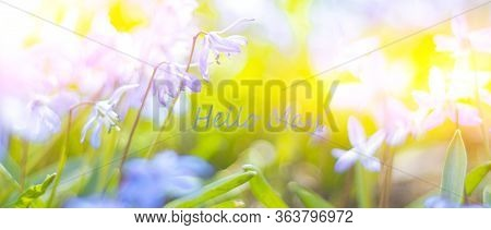 Hello, May May Banner With Place For Text. Blue Flowers. The First Spring Flowers.. Natural Young Gr