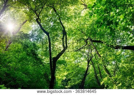 Scenic Forest With Green Leaves
