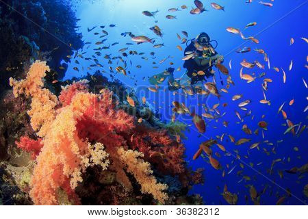 Woman Scuba Diver swims through tropical fish beside coral reef