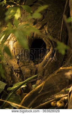 Hole On Tree. Black Hole In Tree Trunk As Entry To Bird Nest.tree Texture Background Pattern. Round