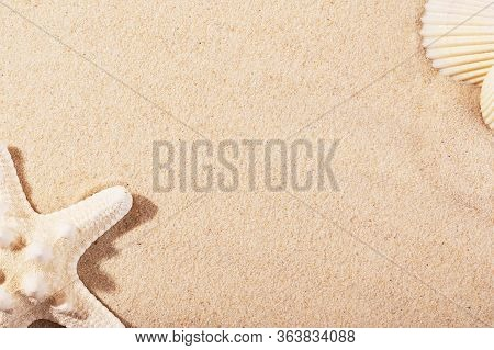 Golden Sand Of Seashore Backdrop. Cute Summer Background With Shells And Starfish. Empty Copy Space
