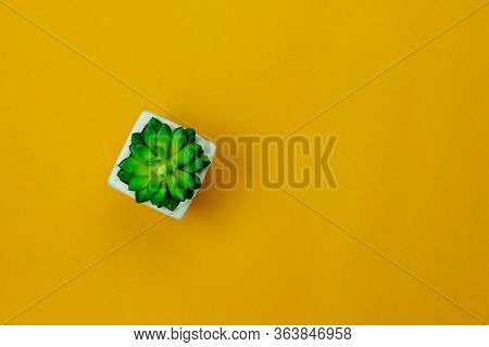 Table Top View Aerial Image Of Minimal Background Concept Or Earth Day.flat Lay Cactus Tree In A Pot