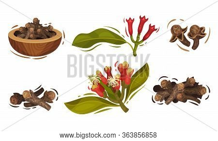 Dried Clove In Bowl And Blossomed Flower Buds Vector Set