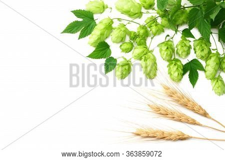 Hop Cones And Wheat Ears Isolated On White Background. Beer Brewing Ingredients. Beer Brewery Concep