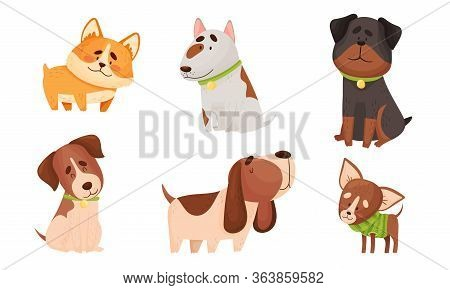Funny Dogs In Sitting And Standing Poses Vector Set