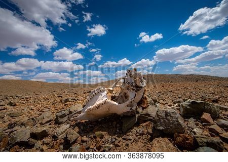 Animal Carrion Cause Of Global Warming Make Arid Landscape On The Earth.