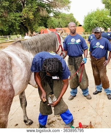 Farrier Performing Maintenance On Old Horseshoe For Horse Hoof