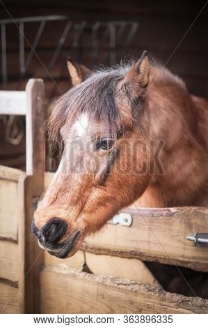 Close Up Of Beautiful Brown Horse Standing Alone In Barn