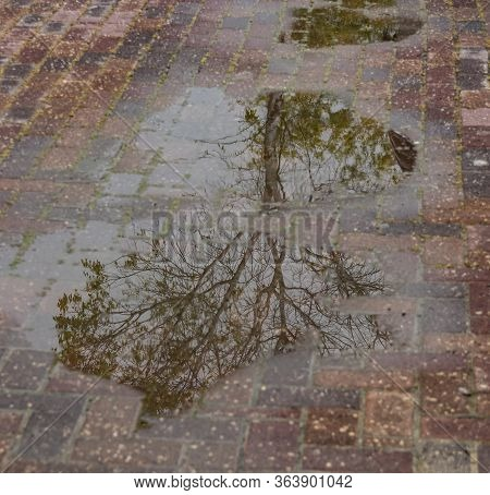 A Tree Reflected In A Row Of Rain Water Puddles On A Reddish Sidewalk. A Photo With A Shallow Depth