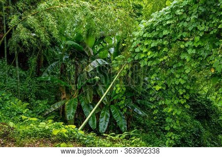 Summer Landscape Of Subtropical Forest After Rain - Palm Tree, Bamboo And Lush Foliage.