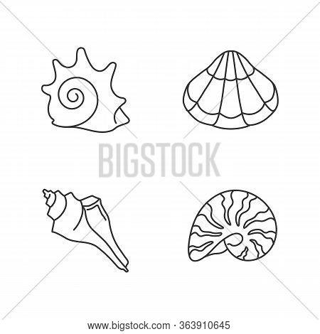 Various Seashells Pixel Perfect Linear Icons Set. Customizable Thin Line Contour Symbols. Rock Shell