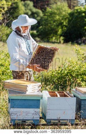 Apiculture, Beekeeping Concept. Beekeeper Man In Professional Beekeeper Costume Inspects Wooden Hone
