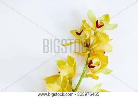 Yellow Orchid Branch Filled With Blooming Flowers On White Background