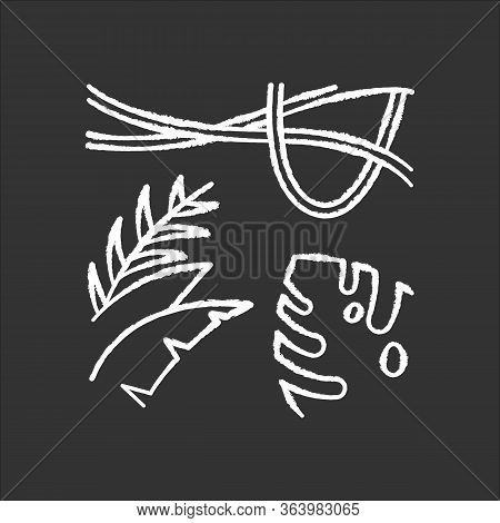 Rainforest Plants Chalk Icon. Evergreen Forest Vines. Swiss Cheese Plant. Trip To Indonesian Jungle.