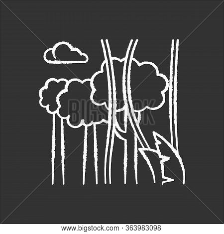 Rainforest Plants And Trees Chalk Icon. Evergreen Forest Vines. Lianas And High Trees. Trip To Indon