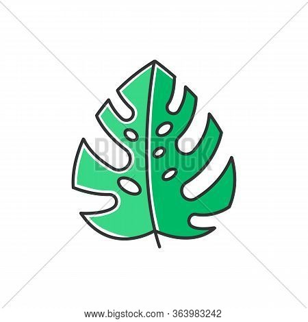 Monstera Leaf Green Color Icon. Evergreen Tropical Forest Vines. Swiss Cheese Plant. Indonesian Isla