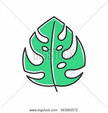 Monstera Leaf Green Color Icon. Evergreen Forest Vines. Swiss Cheese Plant. Indonesian Jungle Palm L